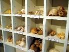 30 gadu laikā ir savākti ap 3 000 dažādu eksponātu, tai skaitā, jūras dzīvnieki, gliemežnīcas, koraļļi un fosilijas 4