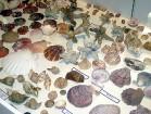 Kolekcijā ir apskatāmi dažādu pasaules jūru gliemežvāki 6