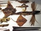 Muzejs piedāvā iepzīties arī ar dažādām jūras zivīm 9