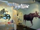 Plašāka informācija par Jūras muzeju: www.grazute.lt 20