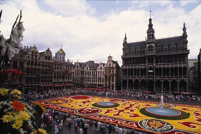 Viens no populārākajiem pasākumiem Briselē ir ikgadējais puķu paklāja festivāls - ziedu paklāja radīšanai tiek izmantotas tūkstošiem begoniju Foto: C