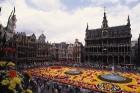 Viens no populārākajiem pasākumiem Briselē ir ikgadējais puķu paklāja festivāls - ziedu paklāja radīšanai tiek izmantotas tūkstošiem begoniju Foto: C 7