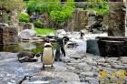 Viena diena tiks veltīta Prāgas zoodārza apmeklējumam. Ne velti Forbes Magazine to nodēvējis par World's 7th Best Zoo – tajā apskatāmi sarkanie ķengur 12