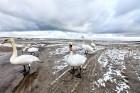 Jūrmalā apskatāmi burvīgi ziemas skati 4
