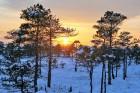 Jūrmalā apskatāmi burvīgi ziemas skati 12