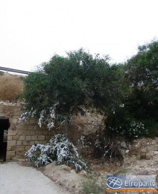Visā Kiprā, kā arī pie Afrodītes klintīm ir redzmi tā dēvētie lūgšanu koki. Tam piesienot lenti un kaut ko ievēloties, vēlēšanās piepildoties. Cilvēki 14749