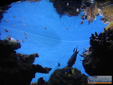 L'Aquàrium Barcelona - www.aquariumbcn.com