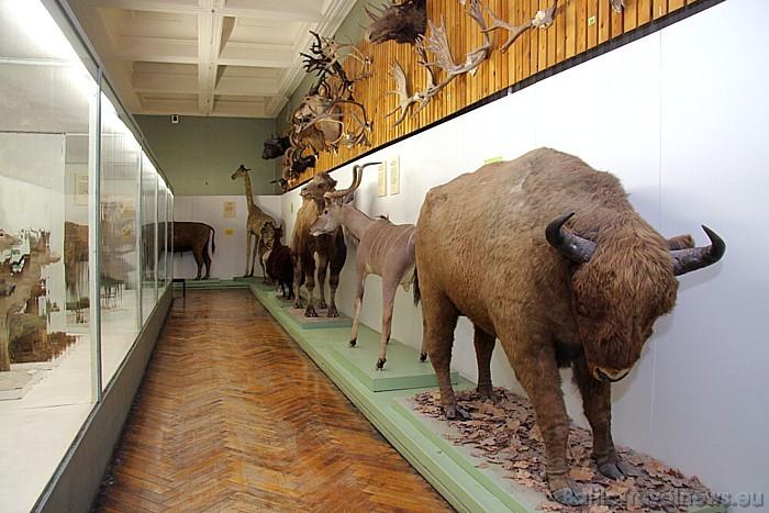 Tartu Universitātes Dabas muzejs apvieno sevī zooloģijas un ģeoloģijas muzeju, kā arī botānikas un mikoloģijas muzeju 47073