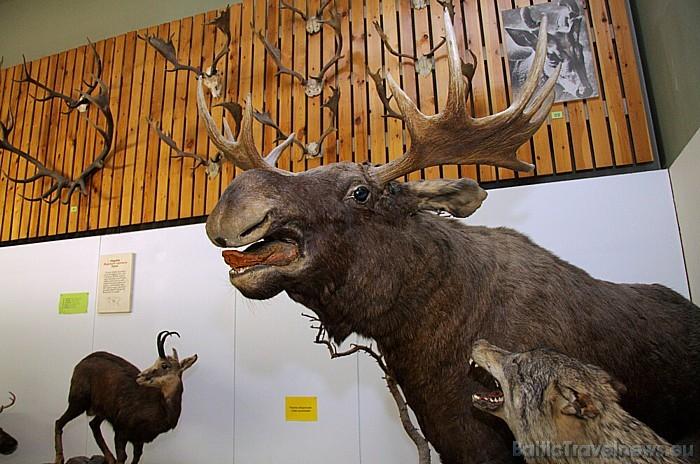 Tartu Universitātes Dabas muzejam ir divas stacionārās izstādes – ģeoloģijas un zooloģijas 47075