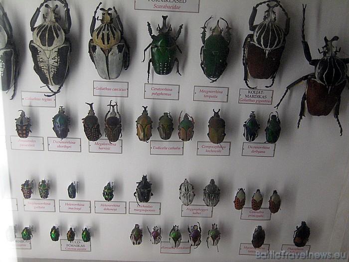 Kukaiņu pasaule - cik viņu ir daudz... 47085