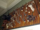 Plašs dažādu dzīvnieku galvas rotu klāsts 7