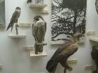 Tiek plānots, ka pēc diviem gadiem Tartu Universitātes muzejs iegūs 'jaunu elpu', jācer, ka plašais eksponātu skaits tiks saglabāts 9