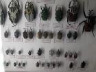 Kukaiņu pasaule - cik viņu ir daudz... 13