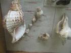 tartu dabas muzejs1 (13) 14