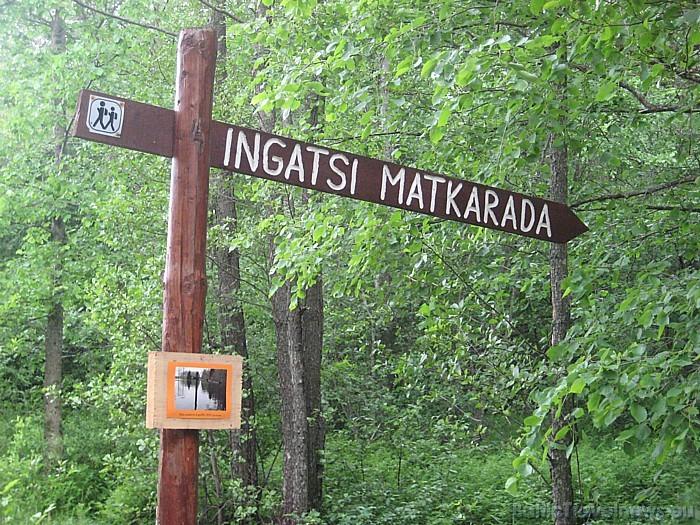 3 km garā Ingatsi dabas taka ir ar augstāko purva nogāzi Igaunijā 47687