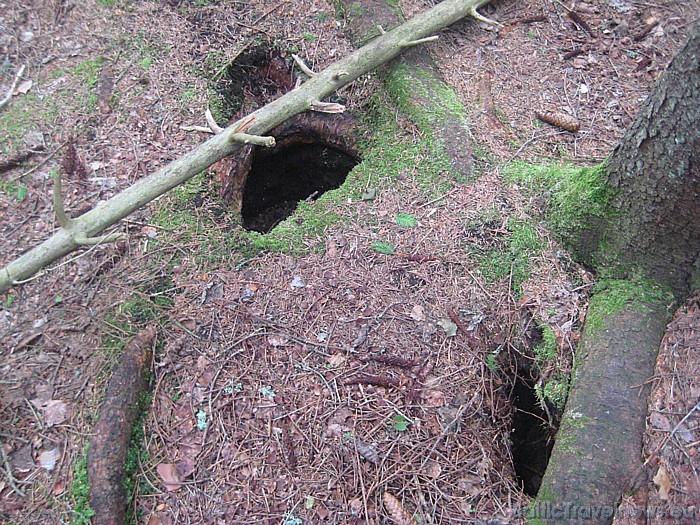 Mežā var ieraudzīt gan meža dzīvniekus un putnus, gan arī to alas 47702