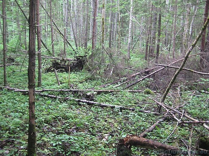 Meža dabiskā vide 47703