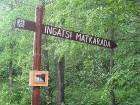 3 km garā Ingatsi dabas taka ir ar augstāko purva nogāzi Igaunijā 2
