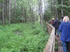Gandrīz kilometru pa meža ceļu un pa meža stigu taka aizved līdz Kuresoo purvam 4