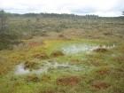 Purvā ir vietas, kur noteikti nedrīkst iet, taču ir arī atzīmētas vietas, kur drosmīgie var atveldzēties kādā no mikroelementiem bagāto purva ezeriņu  13