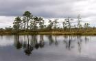 Somā Nacionālais parks ir konkursa Igaunijas neatklātie dārgumi 2009 uzvarētājs, tas ir saņēmis Eiropas neskarto teritoriju PAN Parks statusu 15