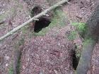 Mežā var ieraudzīt gan meža dzīvniekus un putnus, gan arī to alas 17