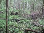 Meža dabiskā vide 18